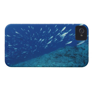 School of Fish 6 iPhone 4 Cover