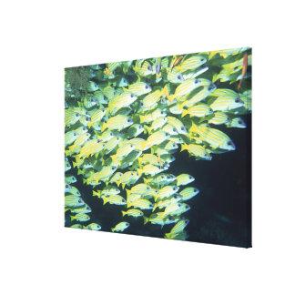 School of Fish 7 Canvas Print