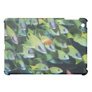 School of Fish 7 iPad Mini Covers