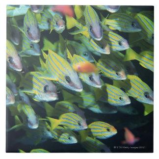School of Fish 7 Tile