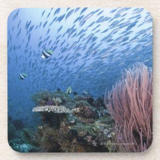 School of fish above reef beverage coaster