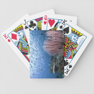 School of fish above reef bicycle playing cards