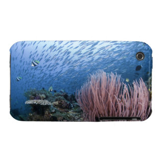 School of fish above reef iPhone 3 cases
