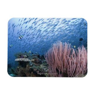School of fish above reef magnet