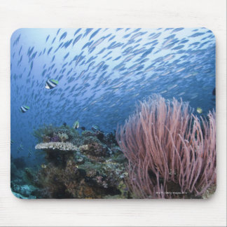 School of fish above reef mouse mat