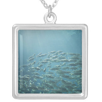 School of fish, Nassau, Bahamas Silver Plated Necklace