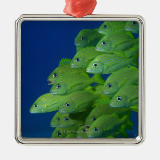 School of french bluestriped and margate grunts christmas ornament