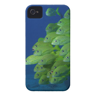 School of french bluestriped and margate grunts iPhone 4 Case-Mate case