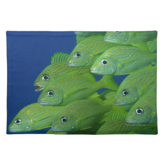 School of french bluestriped and margate grunts placemat