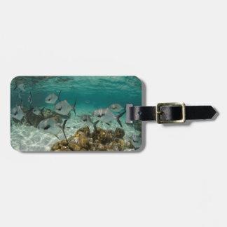 School of Permit Fish Luggage Tag