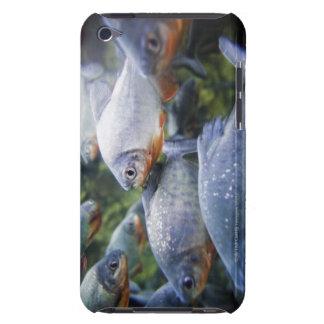 School of Piranhas (Pygocentrus nattereri) iPod Touch Case-Mate Case