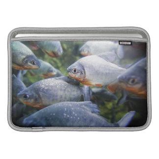 School of Piranhas (Pygocentrus nattereri) MacBook Sleeve