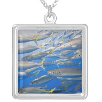 School of Rainbow Runners, Sea of Cortez, Mexico Silver Plated Necklace