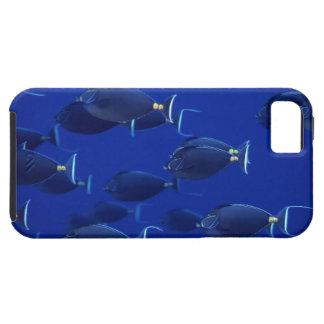 School of smooth-headed unicornfish iPhone 5 case