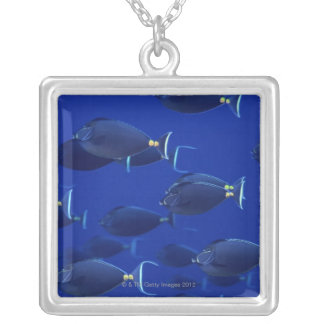 School of smooth-headed unicornfish silver plated necklace