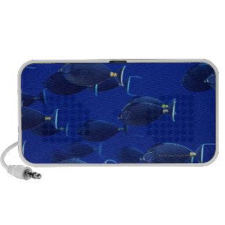 School of smooth-headed unicornfish speaker system