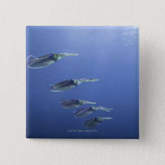School of squid in the Caribbean 15 Cm Square Badge