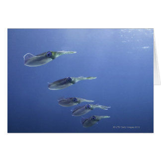 School of squid in the Caribbean Card
