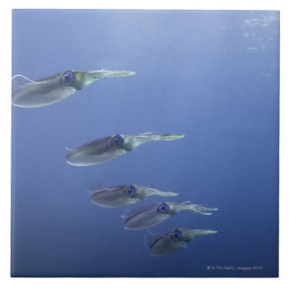 School of squid in the Caribbean Large Square Tile