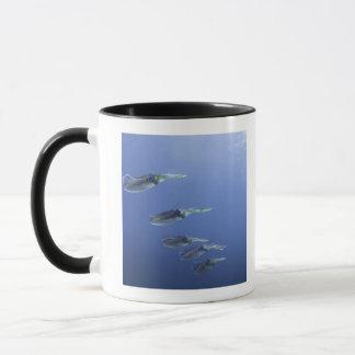 School of squid in the Caribbean Mug