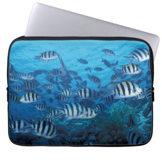 School of Striped Fish Laptop Sleeve
