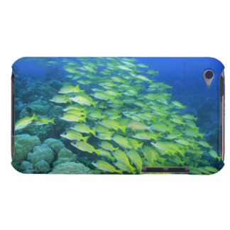 School of swimming bluelined snappers barely there iPod case