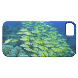 School of swimming bluelined snappers iPhone 5 covers