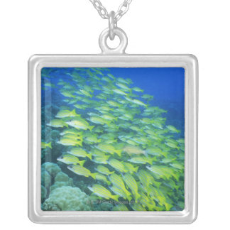 School of swimming bluelined snappers silver plated necklace