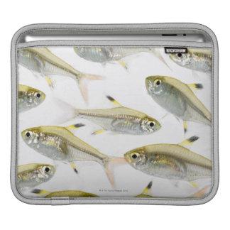 School of X-ray tetra fish (Pristella iPad Sleeve