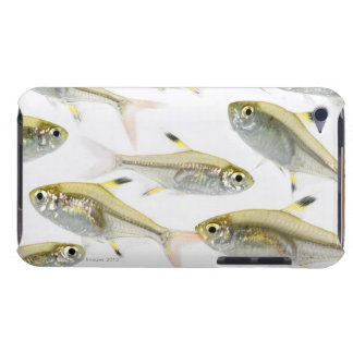 School of X-ray tetra fish (Pristella iPod Touch Covers