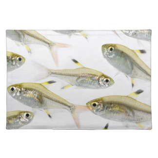 School of X-ray tetra fish (Pristella Placemat