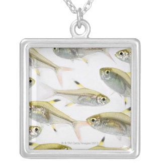 School of X-ray tetra fish (Pristella Silver Plated Necklace