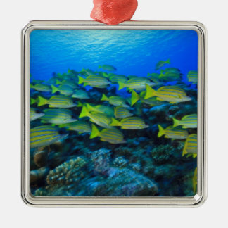 Schooling Bluestripped Snappers Lutjanus Christmas Ornament