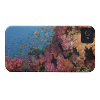 Schooling Fairy Basslets 2 iPhone 4 Case