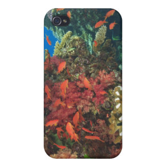 schooling Fairy Basslets (Pseudanthias 3 iPhone 4/4S Cases