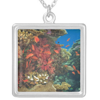 schooling Fairy Basslets  (Pseudanthias 3 Jewelry