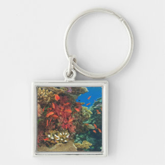 schooling Fairy Basslets  (Pseudanthias 3 Silver-Colored Square Key Ring