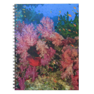 schooling Fairy Basslets  (Pseudanthias 4 Spiral Notebook