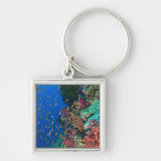 Schooling Fairy Basslets (Pseudanthias Keychains