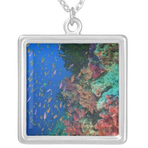 Schooling Fairy Basslets (Pseudanthias Personalized Necklace