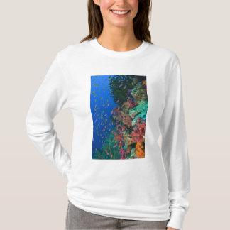 Schooling Fairy Basslets (Pseudanthias T-Shirt