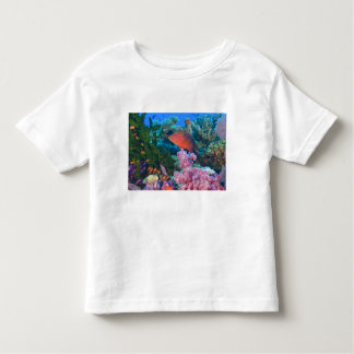schooling Fairy Basslets  (Pseudanthias Toddler T-Shirt