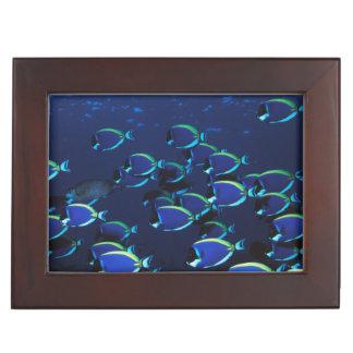 Schooling Powder Blue Surgeonfish Keepsake Box
