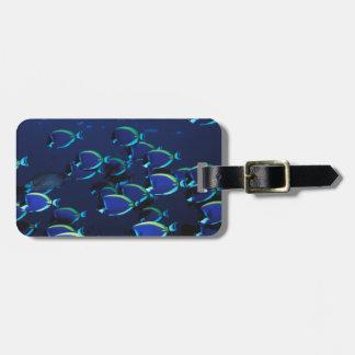 Schooling Powder Blue Surgeonfish Luggage Tag