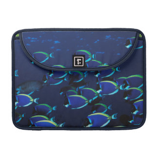 Schooling Powder Blue Surgeonfish Sleeve For MacBooks