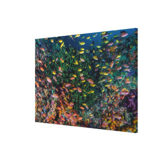 Schools of Fish Swim in Reef Canvas Print