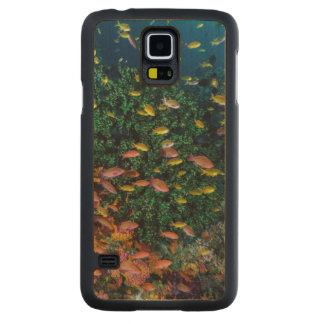 Schools of Fish Swim in Reef Carved Maple Galaxy S5 Case