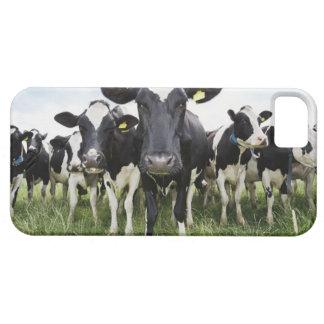 Schüchtert stehendes in einer Reihe ein, die Kamer iPhone 5 Covers