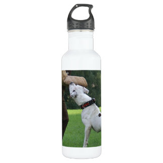 Schutzhund American Bulldog 710 Ml Water Bottle