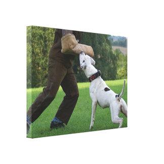 Schutzhund American Bulldog Gallery Wrap Canvas